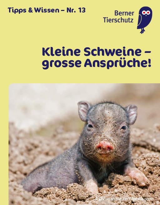 1412_news_minibooklet_kleine_schweine