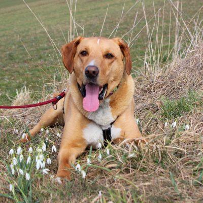 hunde_adoption_tim_1